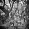 Trees and donkeys