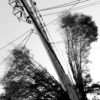 Trees and electric pole