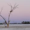 Trees and bird nest