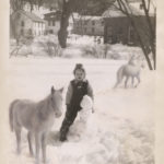 Child, horses and snowman in the winter