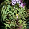 Woman projected onto plants