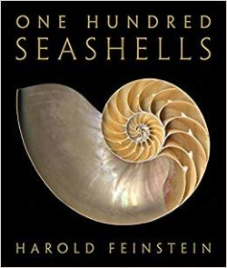 1-- Seashells