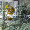 Reflection of a garden in a window