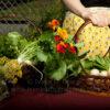 Eggs, broccoli and basket