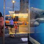 A window reflection of a woman waiting, a woman walking by and a poster of a shark.