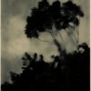 Dark trees against the sky