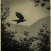 A bird flying in the rain.
