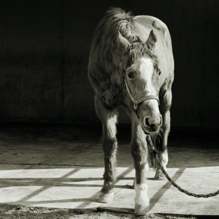 A horse stands in barn.