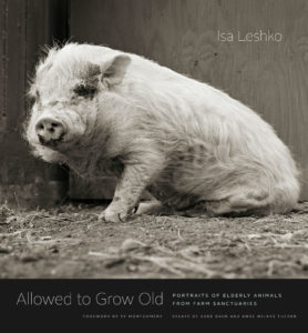 This is the cover of Isa Leshko's book. It is pig seated on a barn floor.