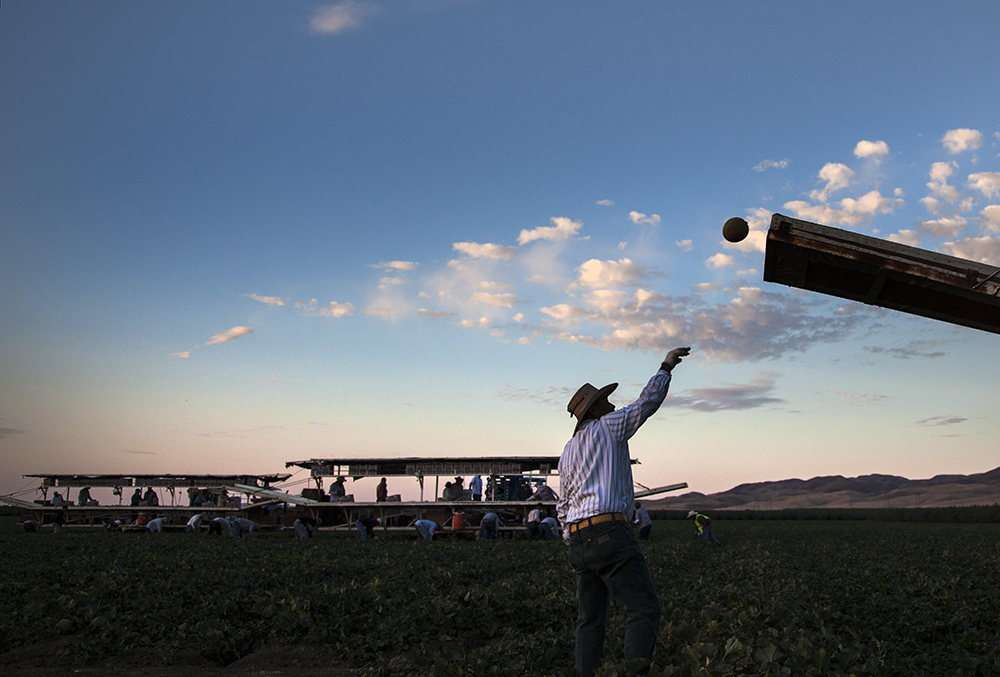 A farmer throwing a cantaloupe.