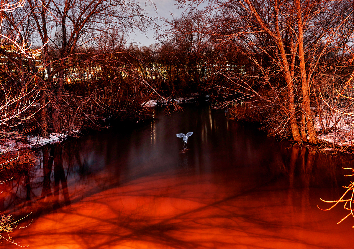 A bird flying in the middle of a red body of water surround by leafless trees.