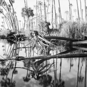 felled palms