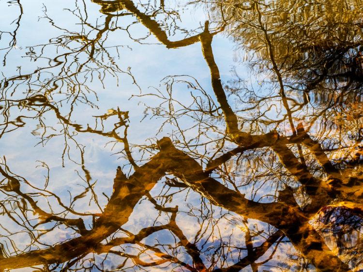 mg branch reflection