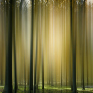 trees with sun stream