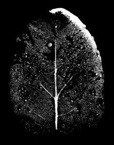ld leaf