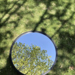 trees in mirror
