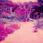 sand and pink trees