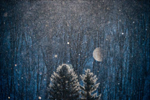 Xuan Hui night tree