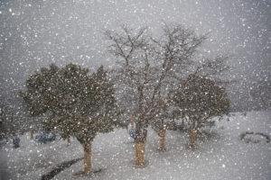 gb - lcc tree and snow
