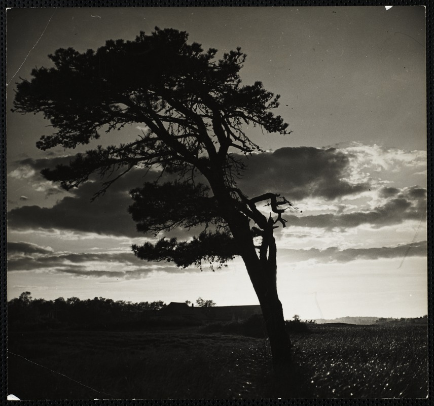 AG Archive- tree and clouds