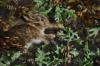 bunny in ferns