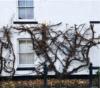vine on wall