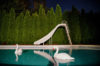 slide with swans
