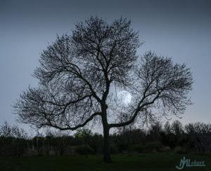 jl tree 1