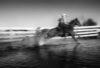 horse splash