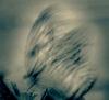 flutter of wings