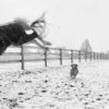 dog and horse play