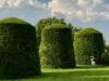 bushes manicured
