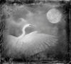 swan and moon